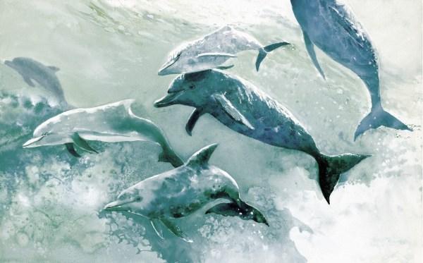 Blue Dolphin Art