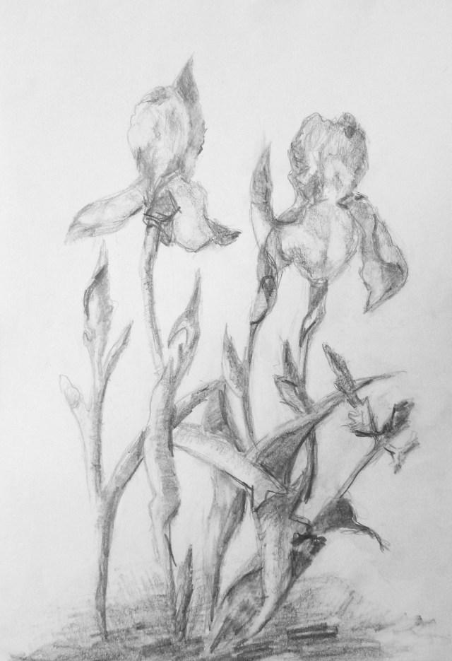 2009 - Iris, 40x50cm, Bleistift