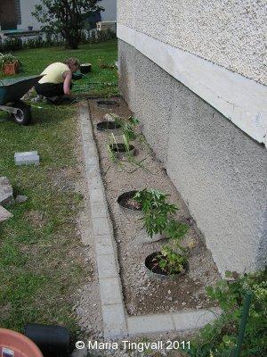 Plantering utanför vardagsrummet