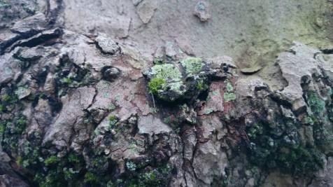 árbol_14