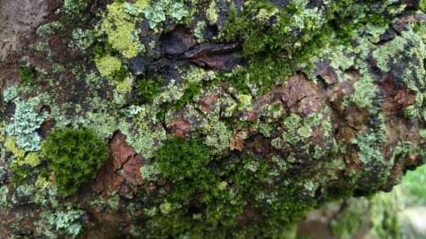 árbol_15