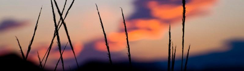 "Foto: ""Siluetas del desierto"" – David Cornejo – https://www.flickr.com/photos/davic/"
