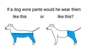 ¿Cómo debería llevar pantalones un perro?
