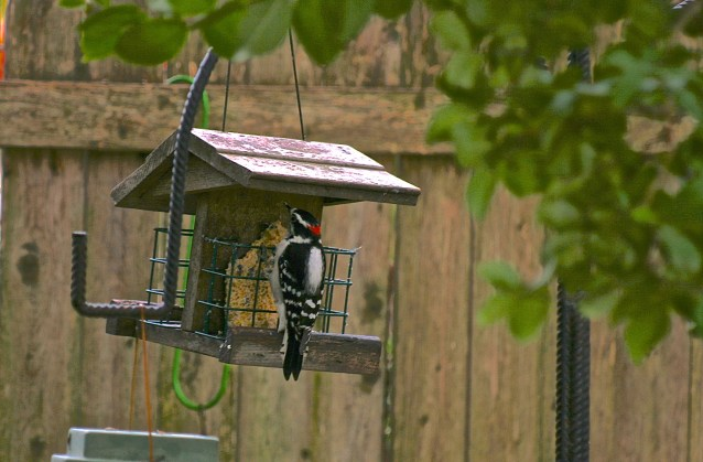 Day 338:2- Woodpecker