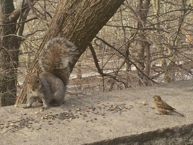Day 71-4 squirrel and bird