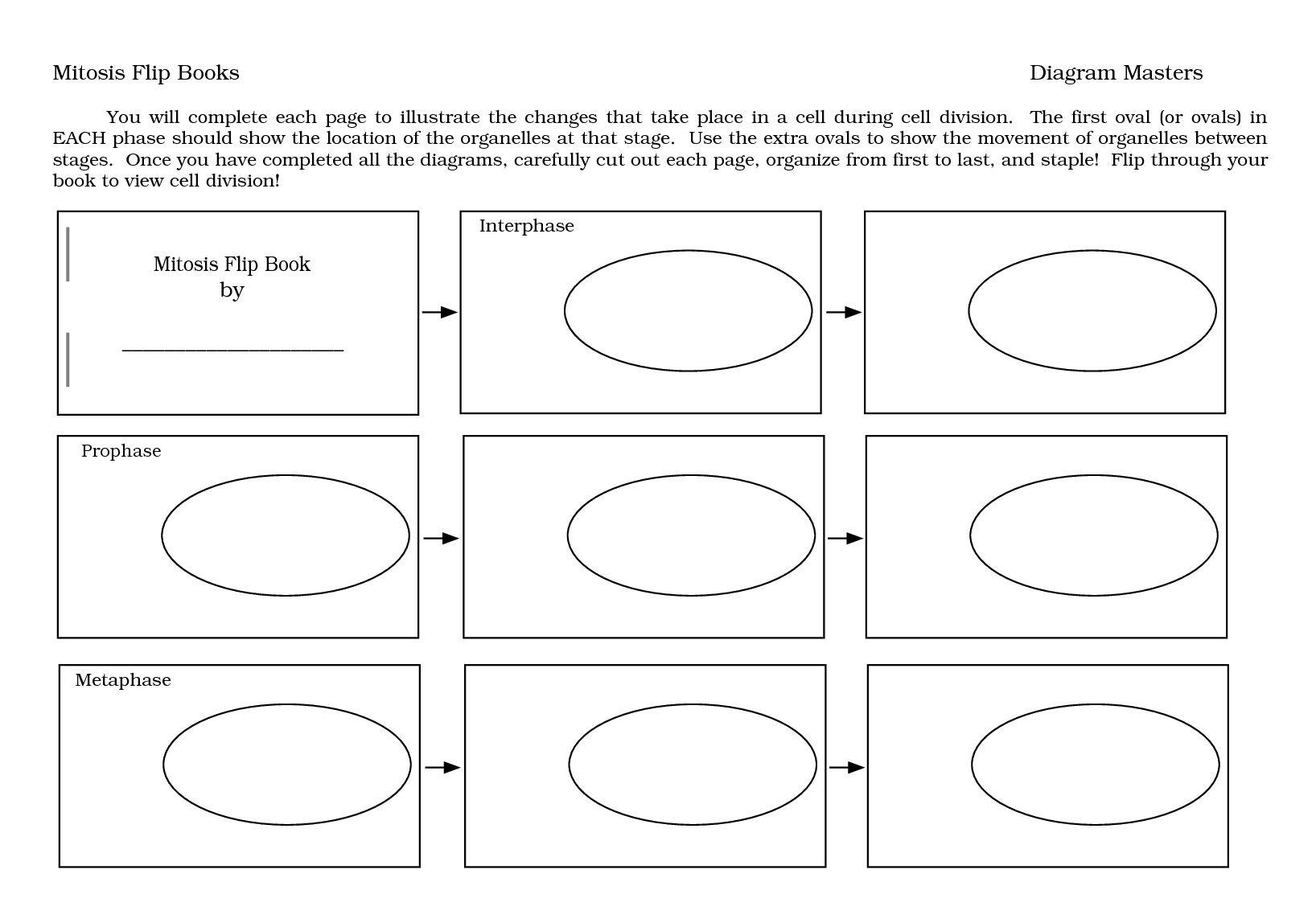 51 Cell Division And The Cell Cycle Worksheet Answers