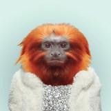 YP-maimuta tamarin