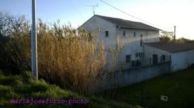 Arles-4