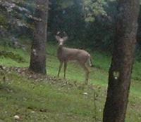 Buck3