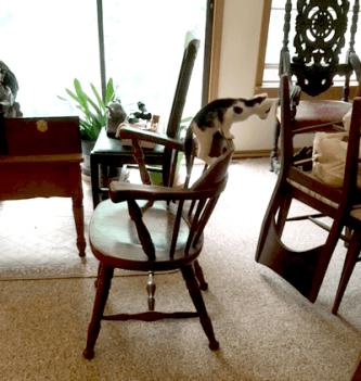 On dis climby chair!
