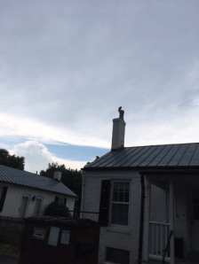 As we approached the house, we saw this. We thought it was a fake to keep swallows out of the chimney.