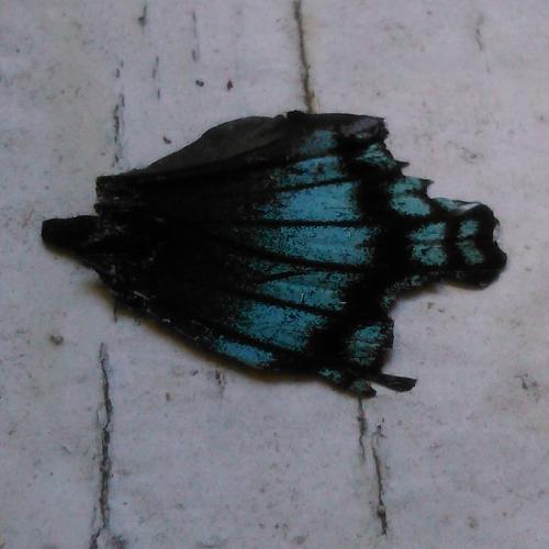 butterflybit1