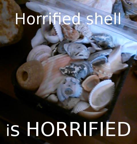 horrified shell