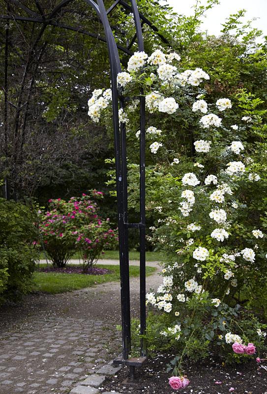 Frognerparken med sine 140.000 roser