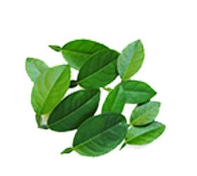 kafir-limeblader