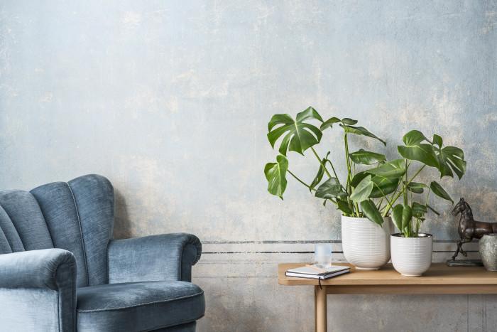 INTERIØRTIPS Grønne planter i interiøret