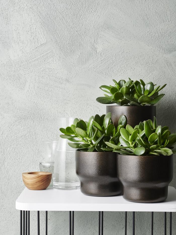 INTERIØRTIPS Grønne planter på et lite bord