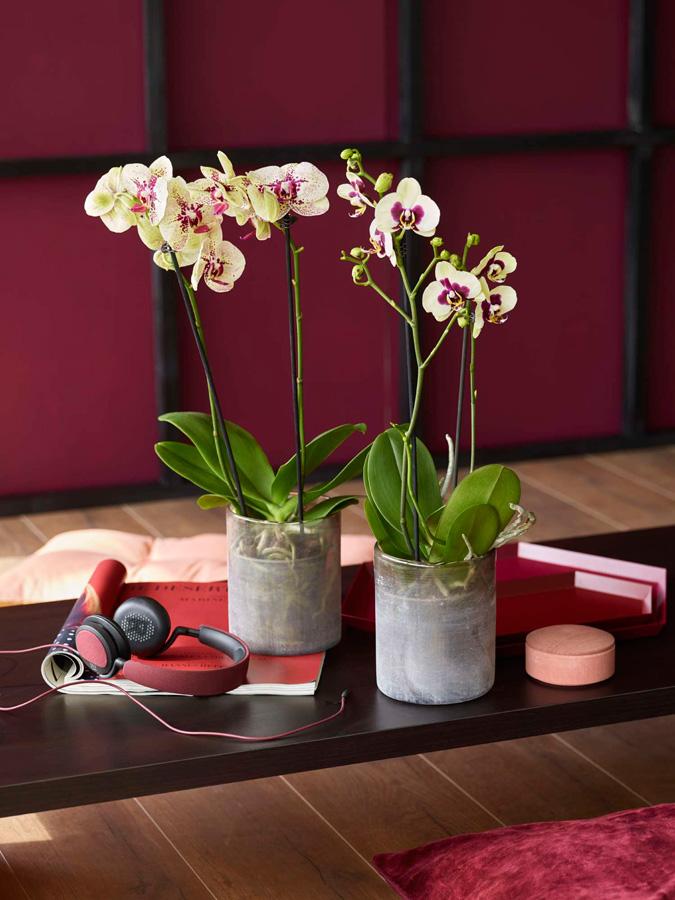 INTERIØRTIPS - INSPIRASJON Orkideer