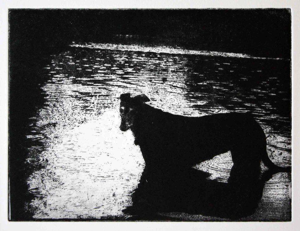 Tranquillity dog in pond etching