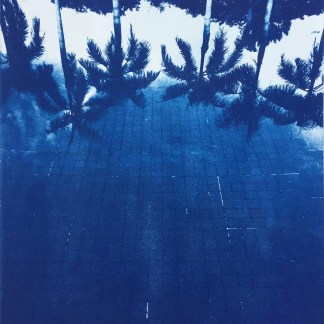 Cyanotype Palm Pool