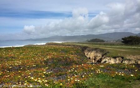 Schovsbo_wildflowers photo