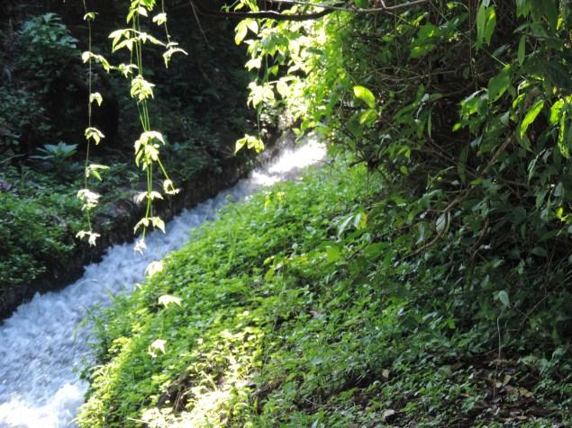 Luz + agua + verdes