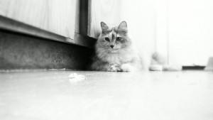 кот в коридоре