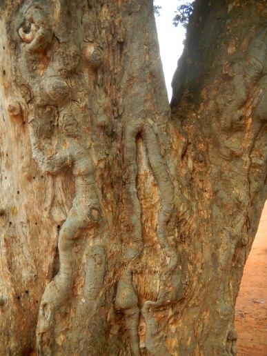 Baumschönheit