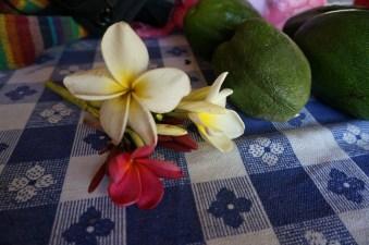 Sacuanjoche - Nicaragua's national flower