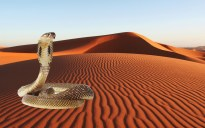 Amazing-Desert-Wallpaper with snake