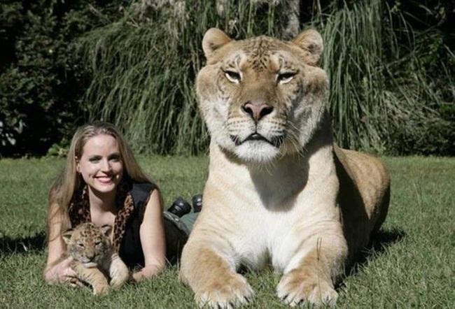La Bella y el felino