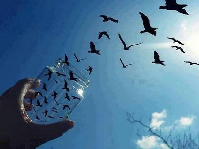 palomas al vuelo-8
