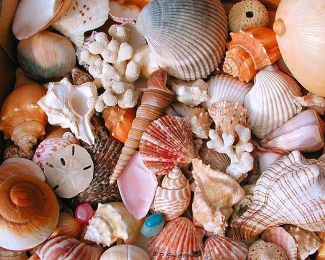 conchas-y-caracoles-1