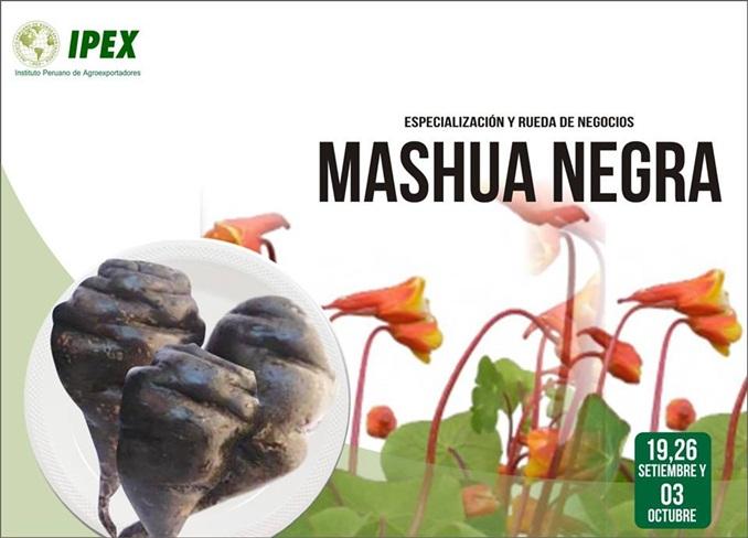mashua-negra-1