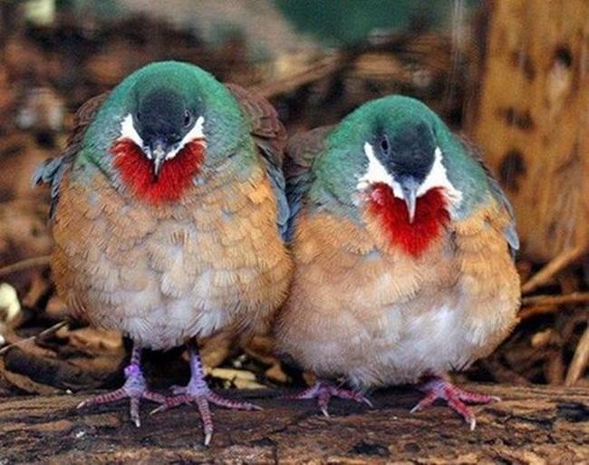 par-de-palomas
