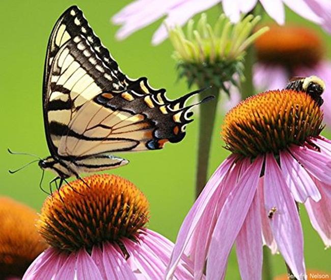 mariposa-1