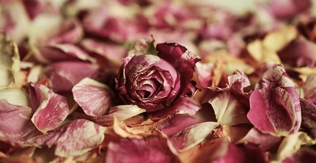 Kesalahan Dalam Penerapan Syari'at Poligami