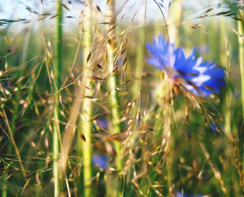 Blumen im Feld