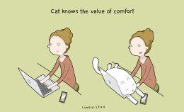 21-benefits-of-having-a-cat-book16__880