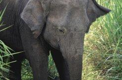 Jour4-elephant-1