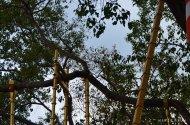 Jour5-branches-arbres