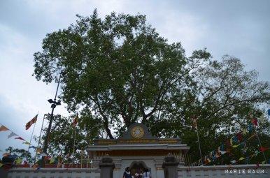 Jour5-plus-vieil-arbre