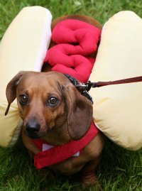Forget the cat caf, the sausage dog caf is coming to ...