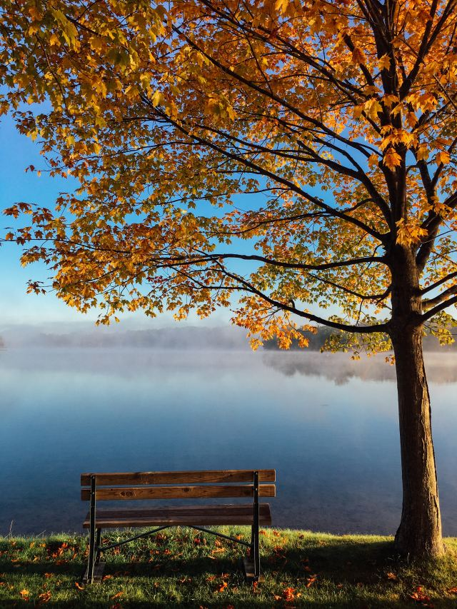 Image of bench overlooking a lack under an autumnal tree on Mariedeveaux.com career coaching thanksgiving Giveaway kicking off 23 Days of Gratitude