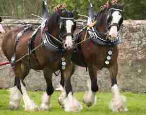Marie Deveauxc areer coach illustrates the power of networking with two clydesdales horses yoked together pulling a carriage or load behind them.