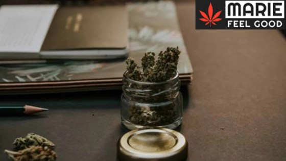 Cannabis Light: la normativa italiana