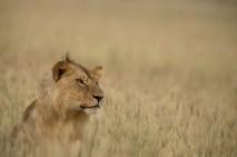 Serengeti Tanzania Thorsten Klint