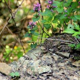 wilde slangen servië