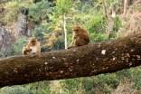 47. Apen in het wild zien