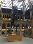 Dinosaur skeleton at the Pitt Rivers Museum